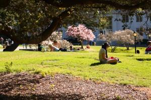 College student studies at UC Berkeley