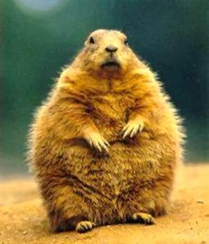 February groundhog