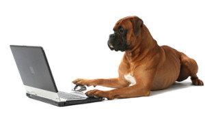 Dog working on Common App 2014